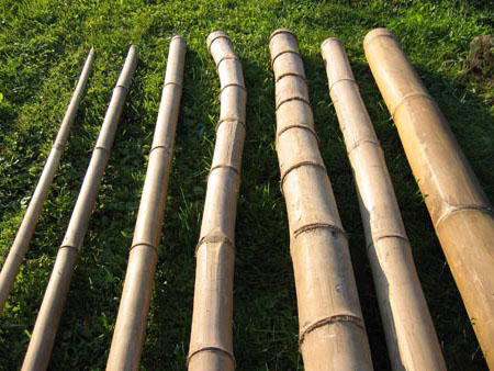 Bambusrohre Fur Deko Bambuskonstruktion Tahas